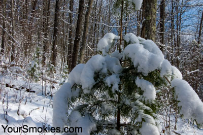 Smokies see significant snow throughout region with more on the way today.